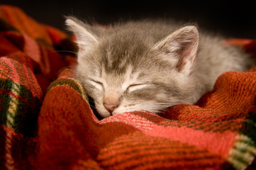 A kitten takes a nap on a red blanket