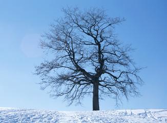 Baum im Schnee, Winter