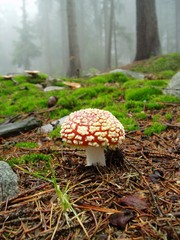 Fly agaric in nice forest