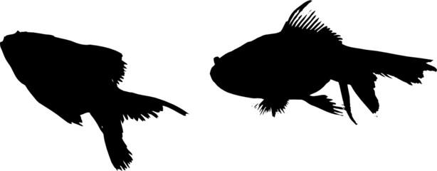 silhouettes poisson