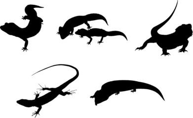 silhouettes réptiles