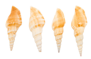 Four seashell