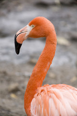 Bright flamingo