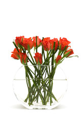 red roses in the vase on white background