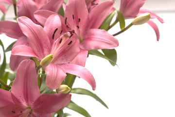 Pink lillies copy space on the right