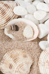 shellfish in sand and white stones