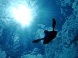 Fototapete Meer - Wasser - Unterwasserlandschaft