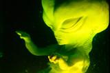 Alien fetus suspended in fluid poster