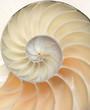 Leinwanddruck Bild - Nautilus shell macro closeup