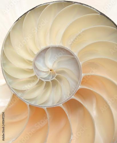 Leinwanddruck Bild Nautilus shell macro closeup