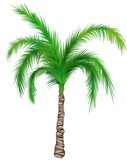 Palm A01 - isolated hand drawn illustration as retouch poster