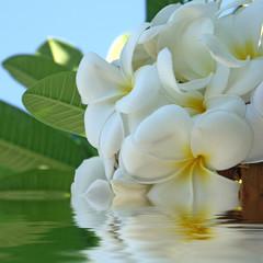 bouquet blanc de frangipanier