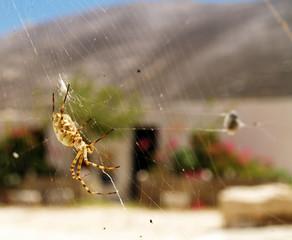Spinne und Gebäude