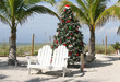 christmas tree - 10658623