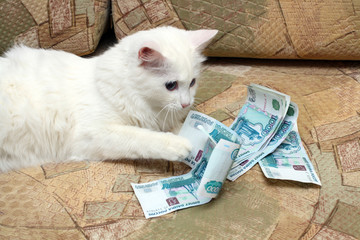 cat count money