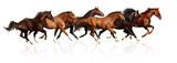 Fototapety herd gallops
