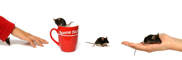 promenade de la souris noire