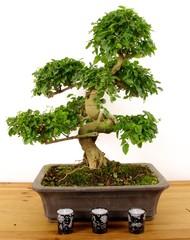 bonsai/bougie