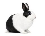 Fototapety Rabbit (11 months)