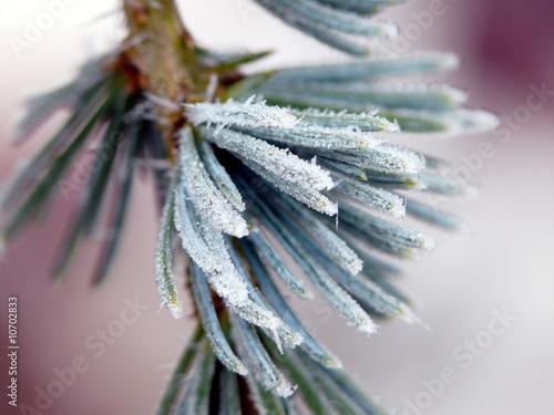 Winter © Nuvola