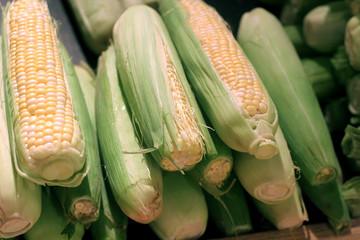 Fresh Corn in Store
