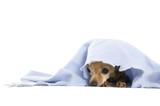 dog nap poster