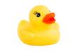 duck new 2