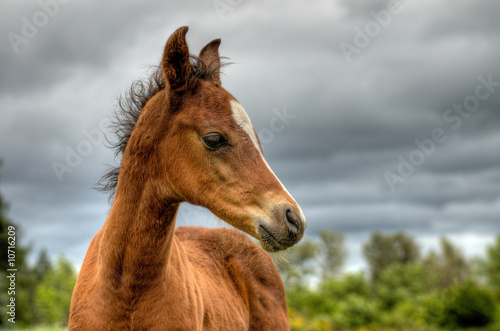 Foal in profile with storm clouds in the background