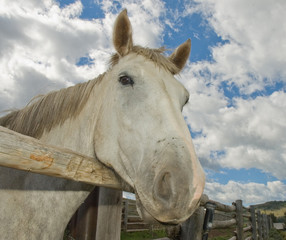 Grey horse with white cloudy sky background