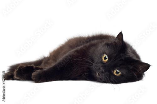 black cat lying on white