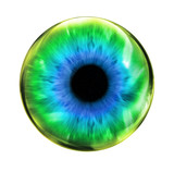 Glossy eye ball