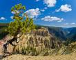 Leinwandbild Motiv Yellowstone Canyon