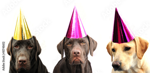 Fotobehang Dragen Dogs in party hats!