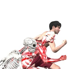 anatomical overlays