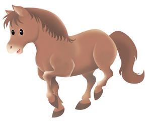 cute wild brown horse