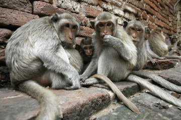 monkeys conservation