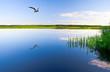 beautiful summer water landscape