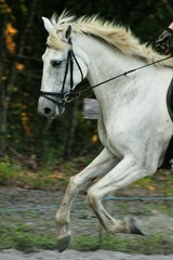 cheval5