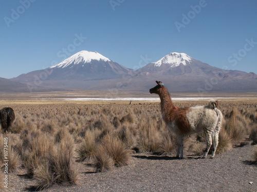 Foto op Canvas Lama KONICA MINOLTA DIGITAL CAMERA