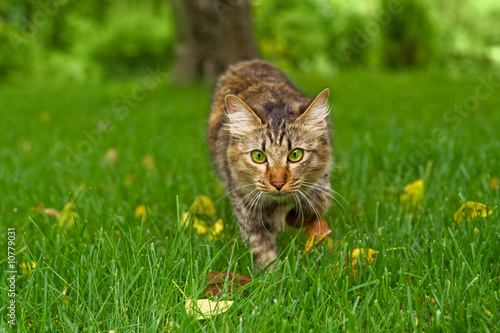 Cat is hunting in green grass