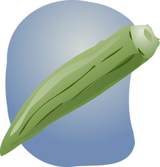 Okra illustration