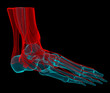 X-ray 3D illustration of human ankle