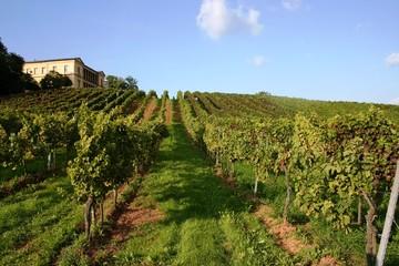 Villa Ludwigshöhe mit Weinreben im Vordergrund