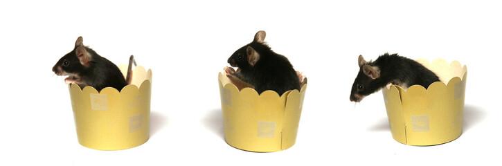 3 petites souris dans des boites