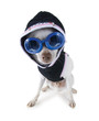 roleta: hoodie dog