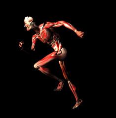 muscoli 1