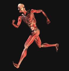 muscoli 2