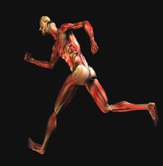 muscoli 3