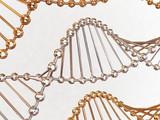 gene in DNA poster