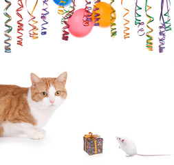 cat and mouse party